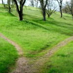 Picture of two paths diverging